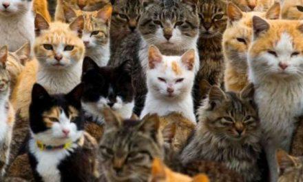 7 choses que vous faites qui font que votre chat vous déteste secrètement