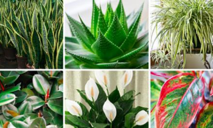 Mettez au moins une de ces 6 plantes dans votre maison pour purifier l'air et éliminer les toxines