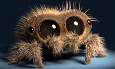 Ne tuez pas les araignées qui vivent chez vous à la maison, elles sont très utiles