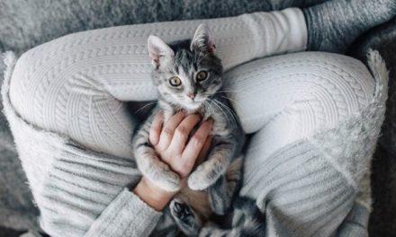 Offre d'emploi : Cette société recherche des personnes pour câliner des chats toute la journée