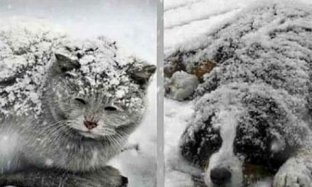 Des personnes sans cœur abandonnent leurs animaux de compagnie dans le froid et les laissent mourir de froid