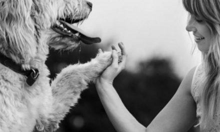 Les 7 bienfaits d'avoir un chien sur votre santé