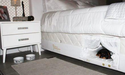Ce lit contient un lit pour que votre chat ou votre chien dorme à côté de vous