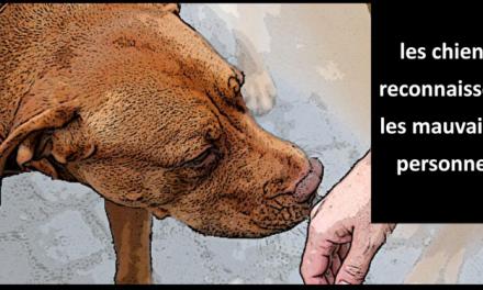 Les chiens peuvent savoir si une personne est bonne ou mauvaise